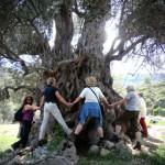 Baum auf Kreta