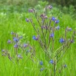 Die großartige Pflanzenwelt von Kreta