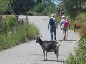 Wandern zwischen wilden Ziegen