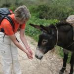 Eselfütterung während Wanderung