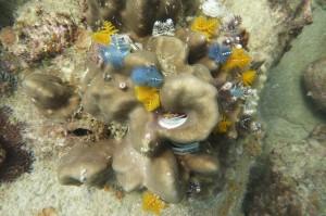 Erkunden Sie das Korallenriff von Kreta